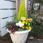 季節の鉢植え