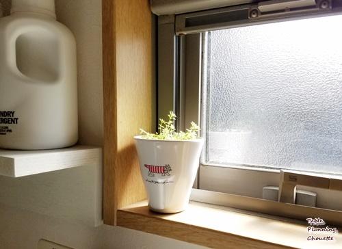 洗面所の窓辺に小さなグリーン
