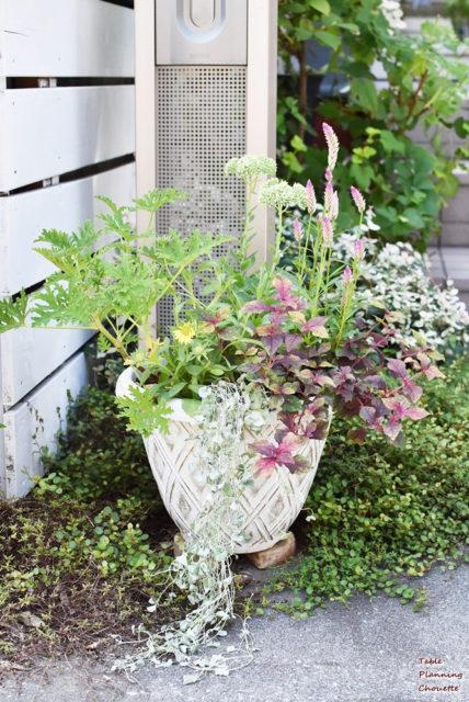 庭の草花のメンテナンス