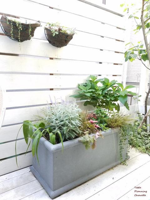庭の草花のメンテナンス ビフォーアフター