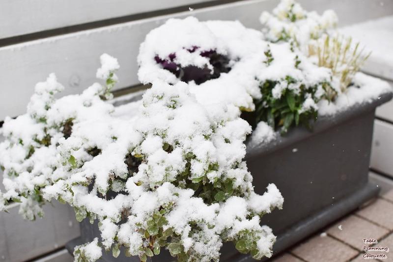 雪が積ってきた